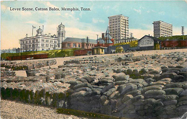 [Image: cobblestone-cotton-1913.jpg]